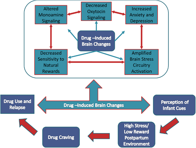 Relationship between drug use and parenting drug use is known to cause