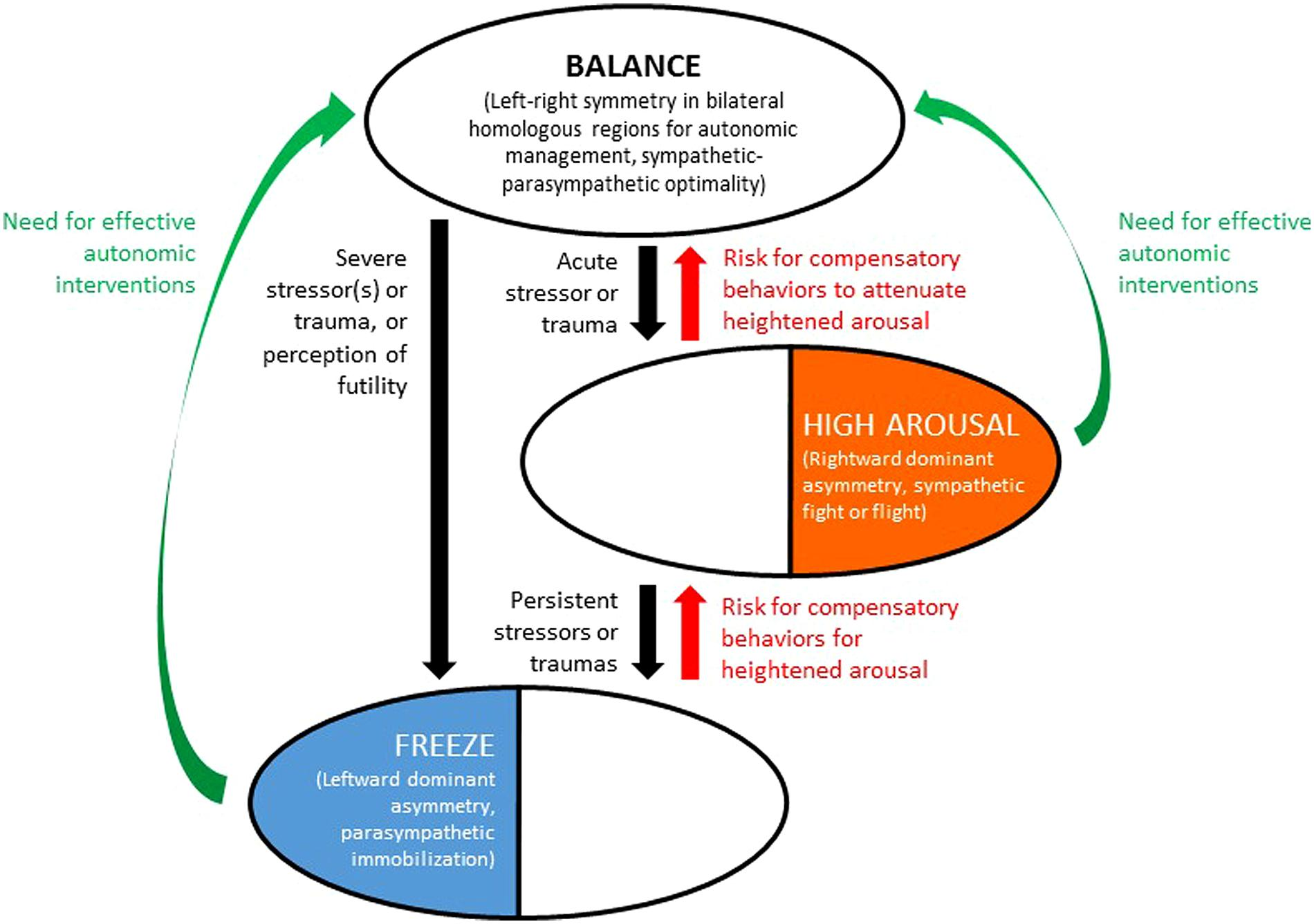 Frontiers A Bihemispheric Autonomic Model For Traumatic