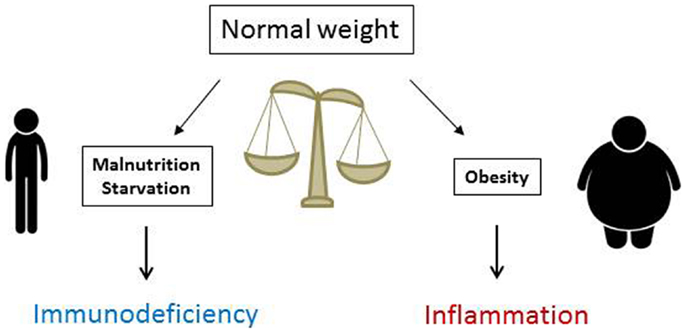 obesity malnutrition V perforated lie – detach here v v perforated lie – detach here v facts about obesity & protein–calorie malnutrition body mass index (bmi) is a reportable hedis/star healthcare quality.