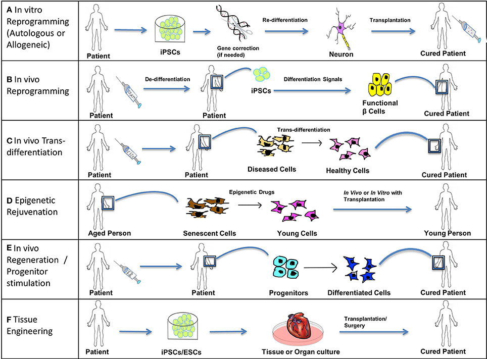 an analysis of human disease and their cure Provides guidance for antiviral treatment of human infection with novel influenza  a viruses associated with severe human disease these viruses  to receive  weekly email updates about seasonal flu, enter your email address:   secondary analyses in some of these trials and additional meta-analyses of.