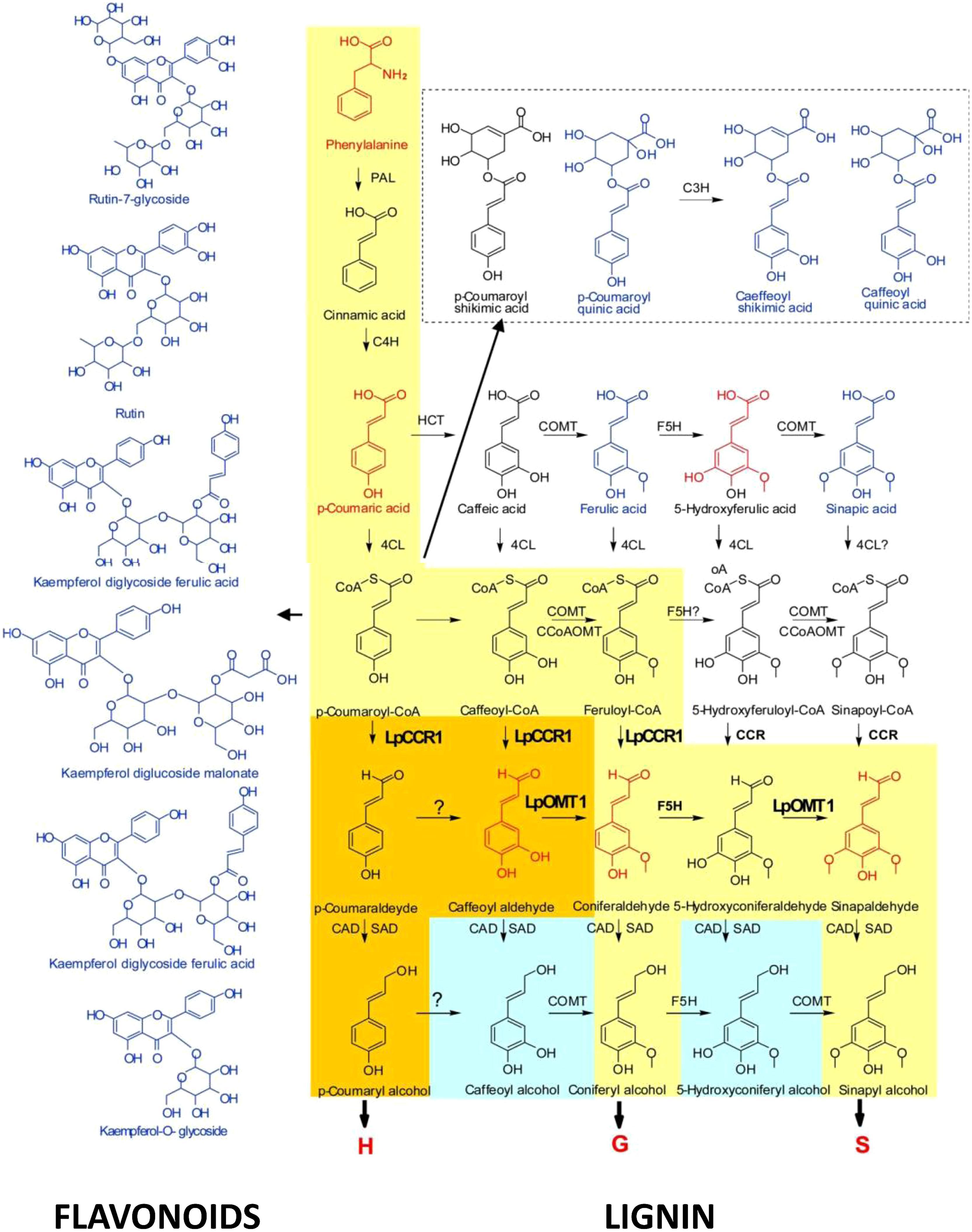 metabolite of drostanolone