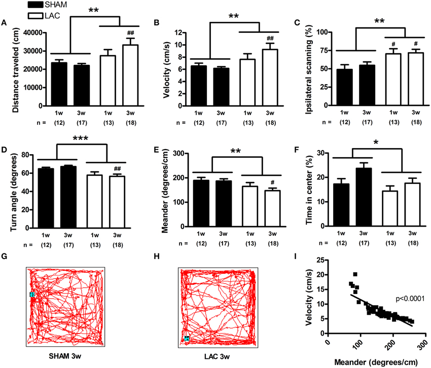 Frontiers | Nigral proteasome inhibition in mice leads to ...