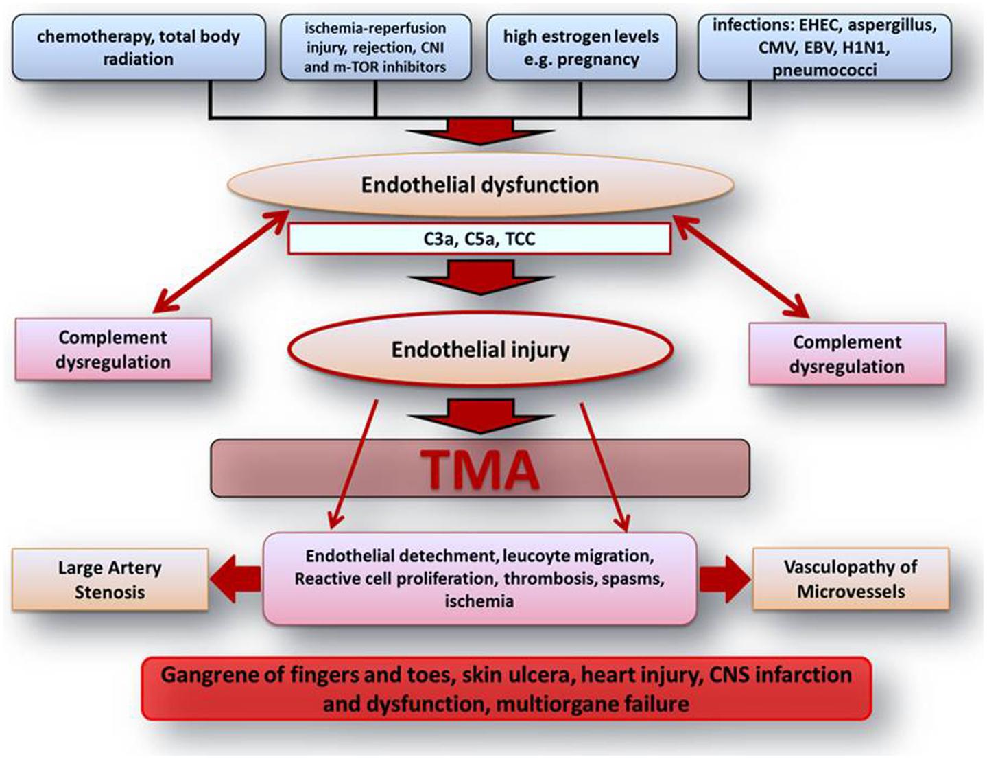 free эффективность использования малоинвазизивных методов в диагностике и восстановительном лечении травм коленного сустава у спортсменов в