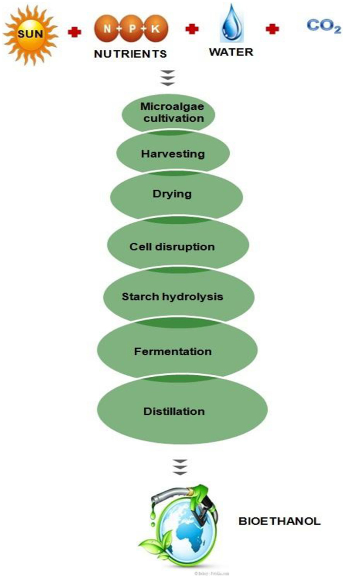 Frontiers   Scope of Algae as Third Generation Biofuels   Bioengineering and Biotechnology