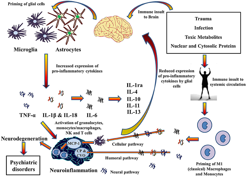 amyloid protein mediated neurodegeneration in alzheimers disease Early-onset alzheimer disease amyloid precursor protein  tau-mediated neurodegeneration in a mouse  onset alzheimer's disease j alzheimers dis.