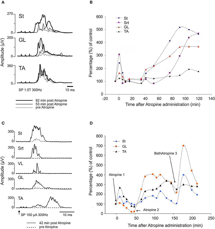 Pregabalin Methylcobalamin Side Effects