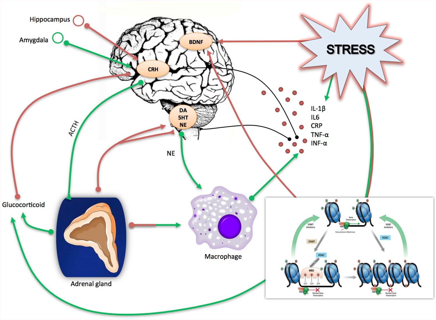 childhood stress leads to depression Early life stress and depression childhood trauma may lead to  neurobiologically unique mood disorders current psychiatry 2005 october4(10 ):14-.