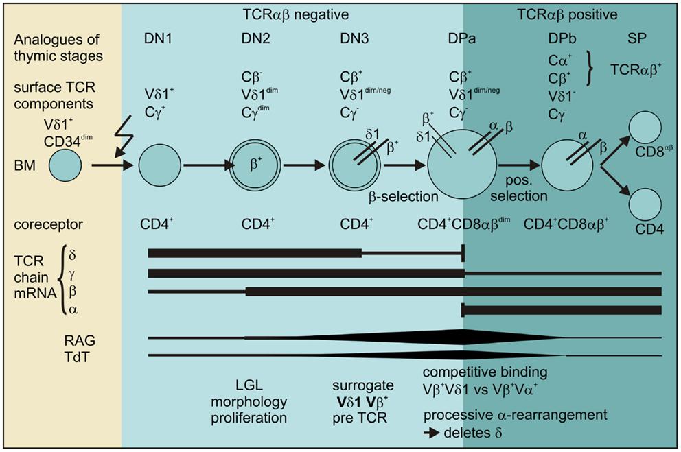 receptor sites for steroid hormones