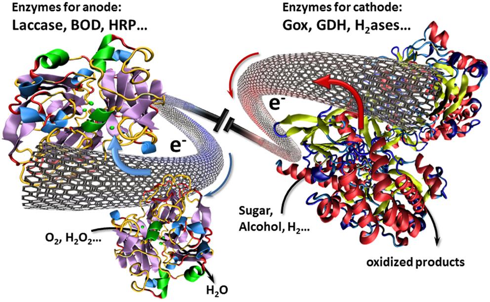 Carbon nanotubes thesis
