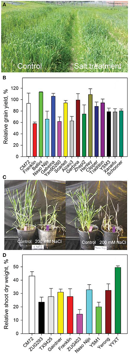 genetic traits in barley plants Dr nils stein, leibniz institute of plant genetics and crop plant  additional  analyses on other genes controlling different traits in barley are still.