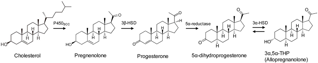 thp stress steroid