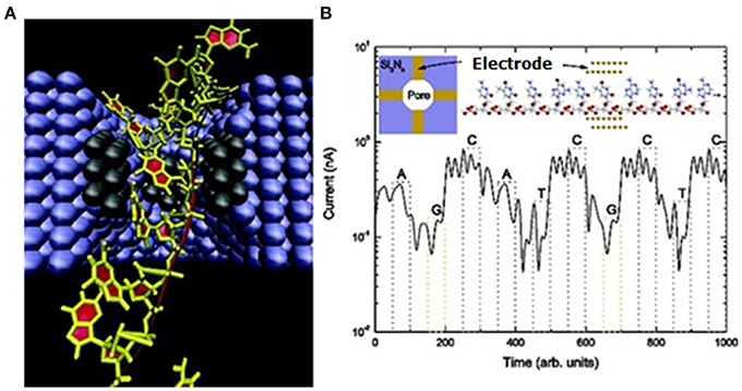 Frontiers | The evolution of nanopore sequencing | Genetics