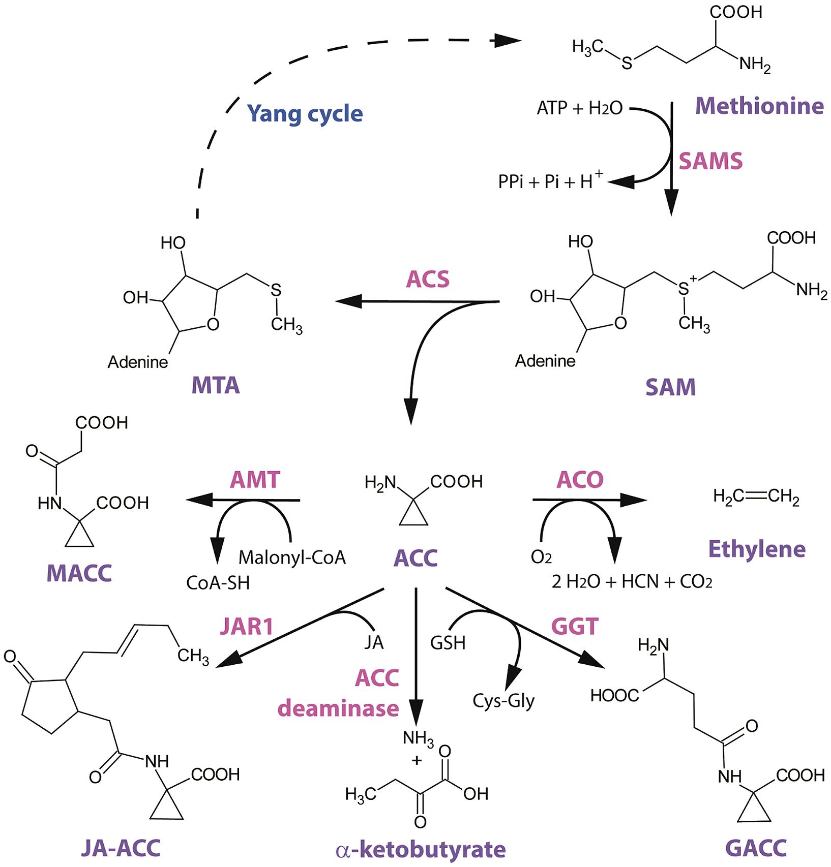 mechanism of hormone action between steroid and nonsteroid hormones
