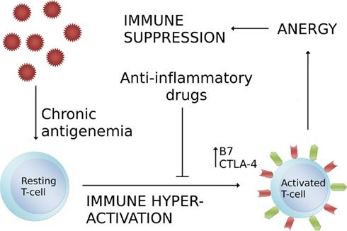 What is the feline immunodeficiency virus?