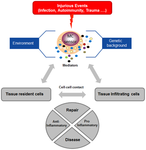 Stress, the neuroendocrine system and mast cells: current understanding of their role in psoriasis 3