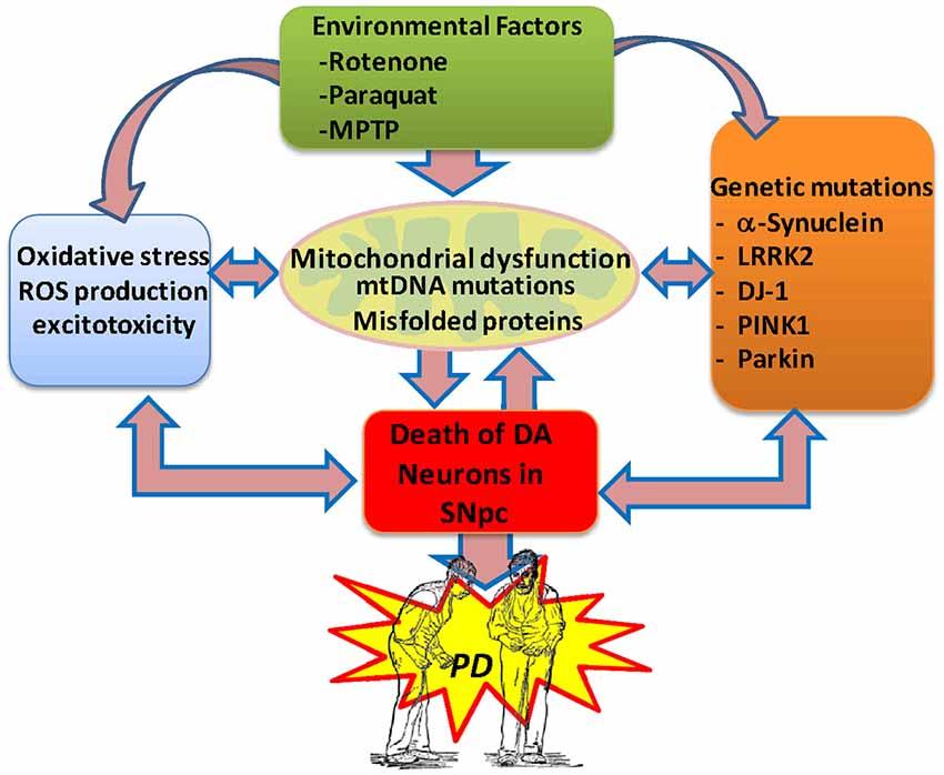 vitamin e effects on cardiovascular system filetype pdf