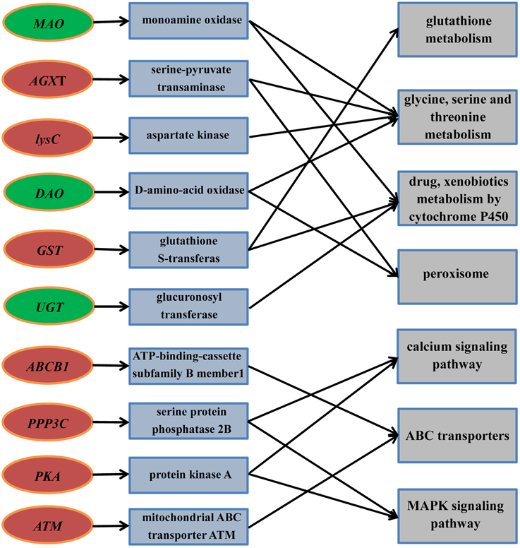 Insights Into Root Criteria Of Hypoglycemia Symptoms