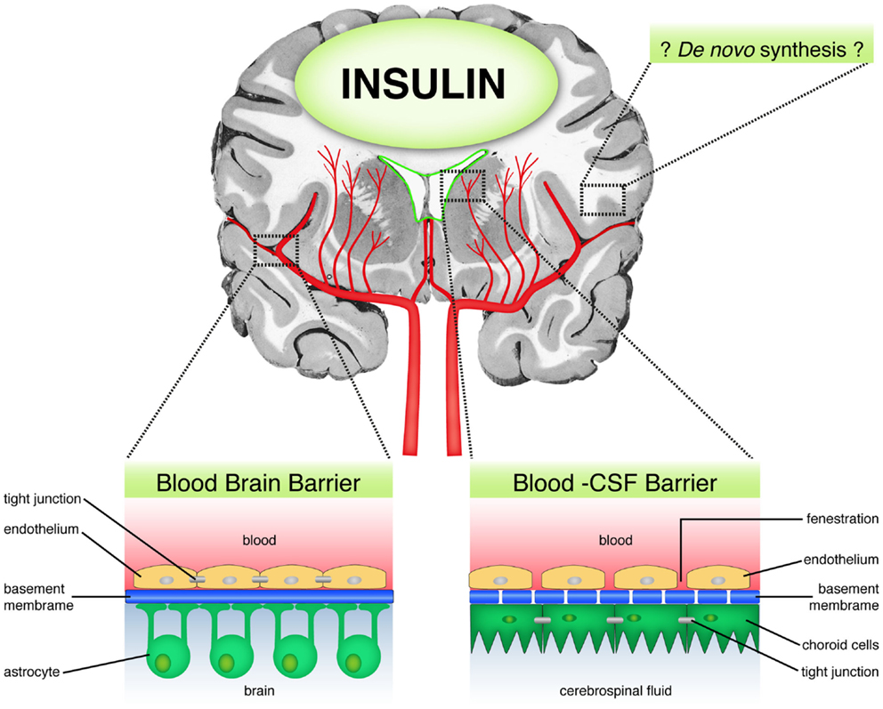A grand dame with hidden aces: The non-diabetic uses of insulin