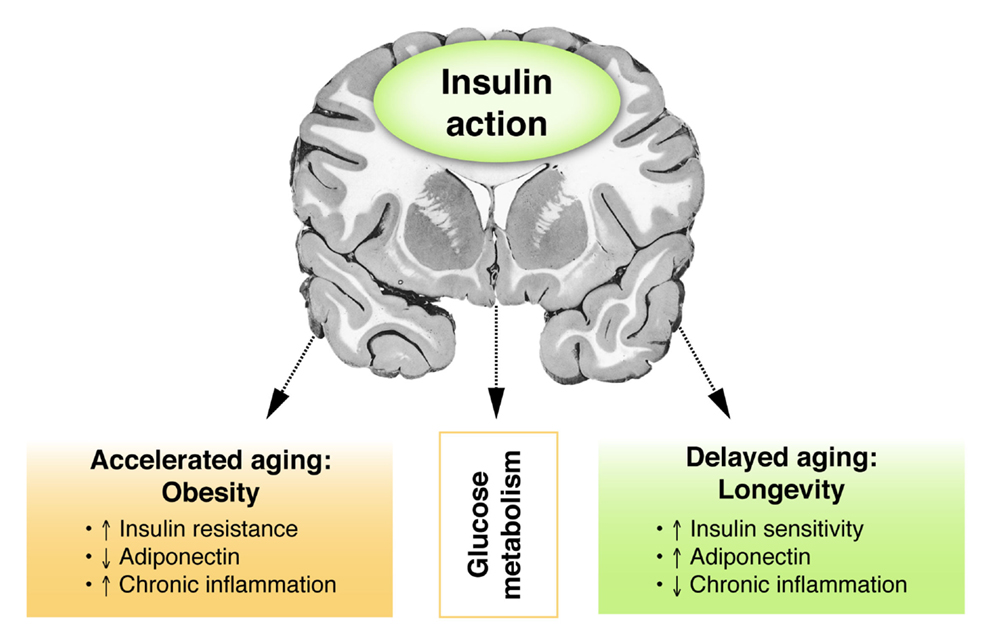 Aging Review Nature