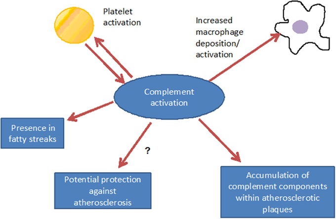 role of complement factors on nciph The elusive physiologic role of factor xii  the complement system by directly activating complement components c3 and c5 and cleaving α-fxiia to form β-fxiia (a.