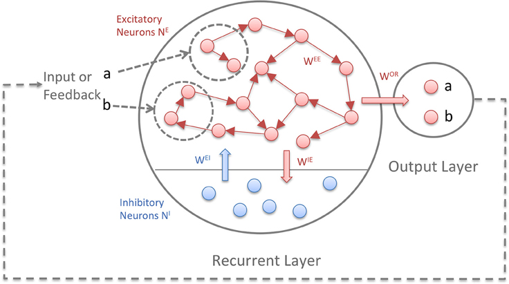 Frontiers | RM-SORN: a reward-modulated self-organizing recurrent ...