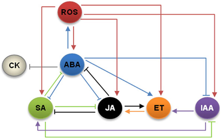brassinosteroid perception in the epidermis controls root meristem size