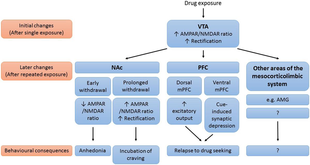 rapid responses to steroid hormones 2013