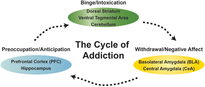 Addiction Cycle Diagram Photo Album - Worksheet for Kids Images ...