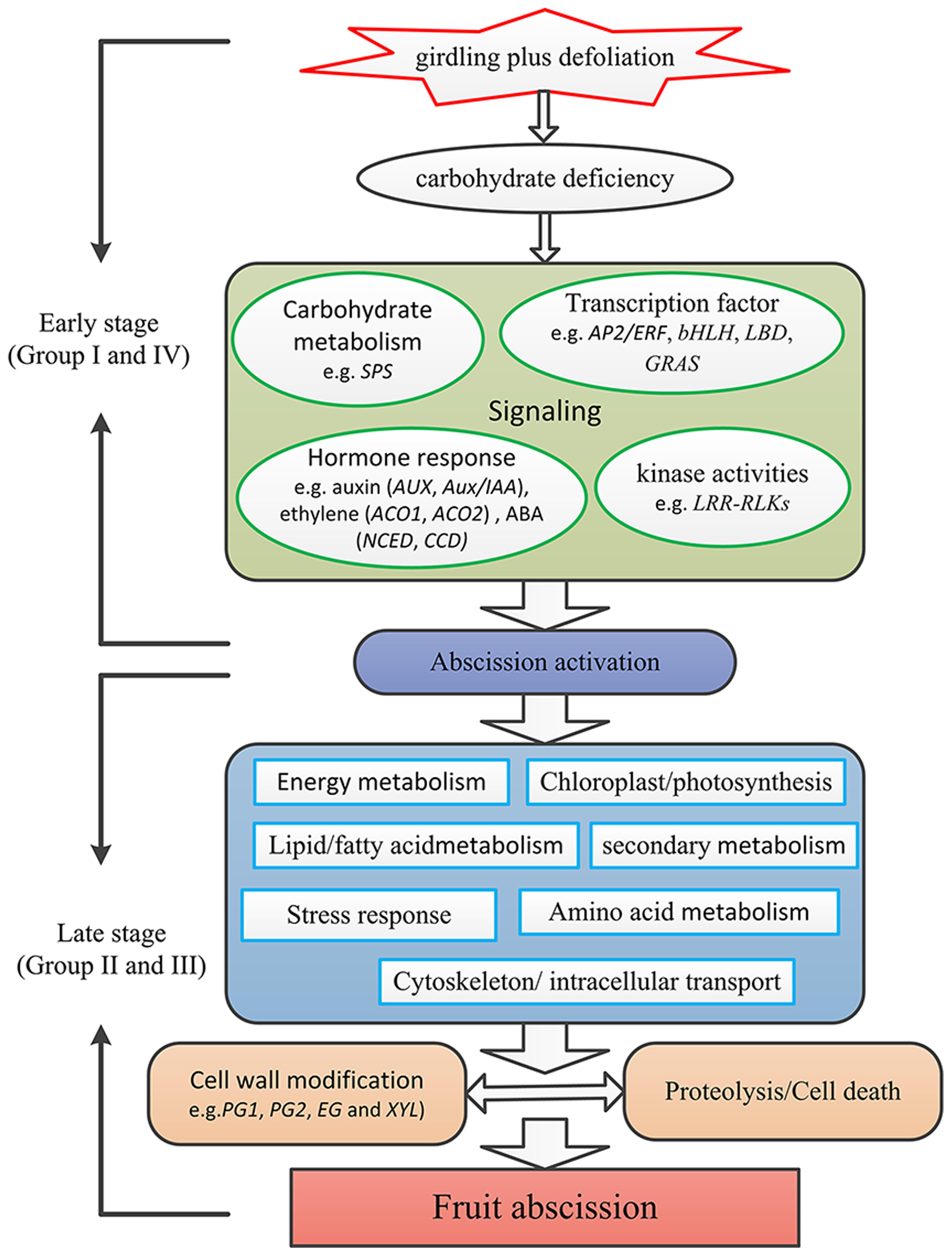 mechanism of hormone action between steroid and nonsteroid hormones