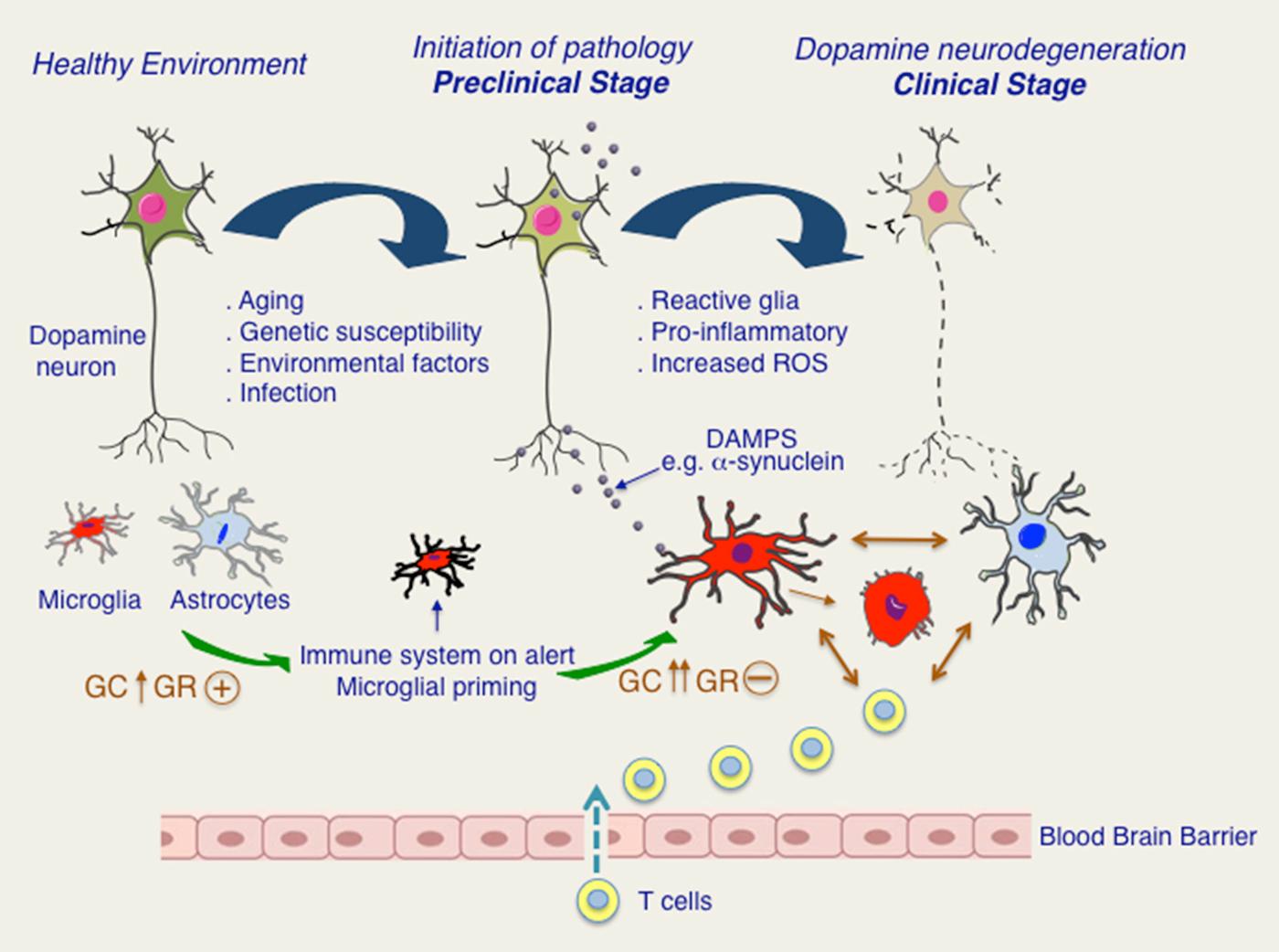 corticosteroid receptor hypothesis