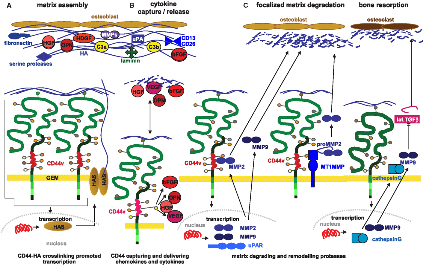 molecular mechanisms of steroid hormone action