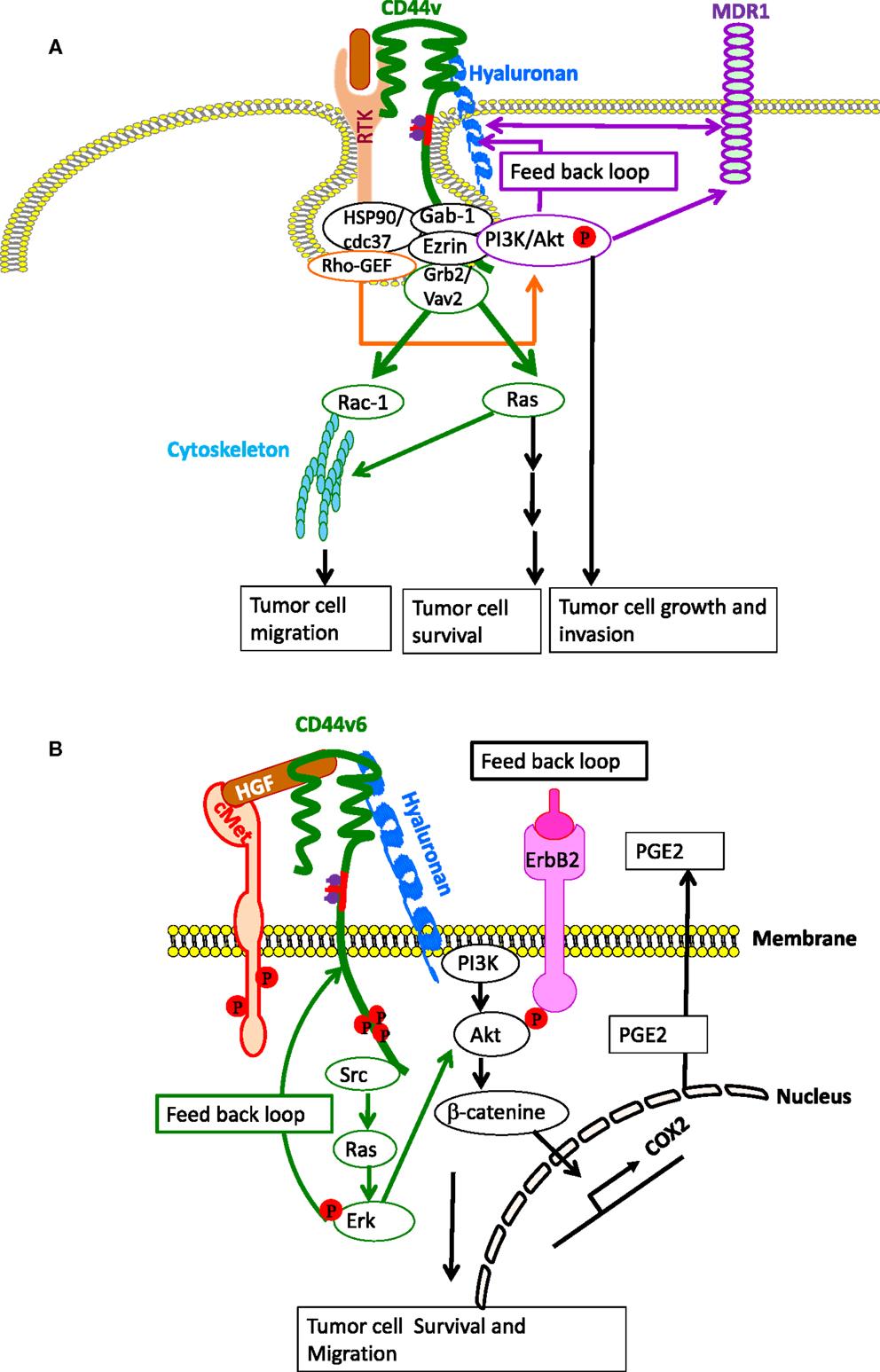 pdf Geochemische Untersuchungen im Bereich