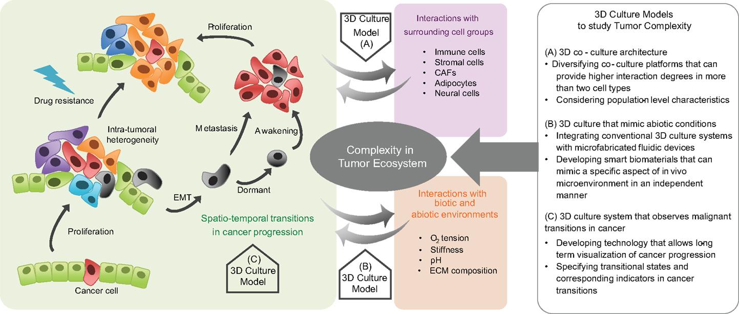 Nature Review On Metastasis