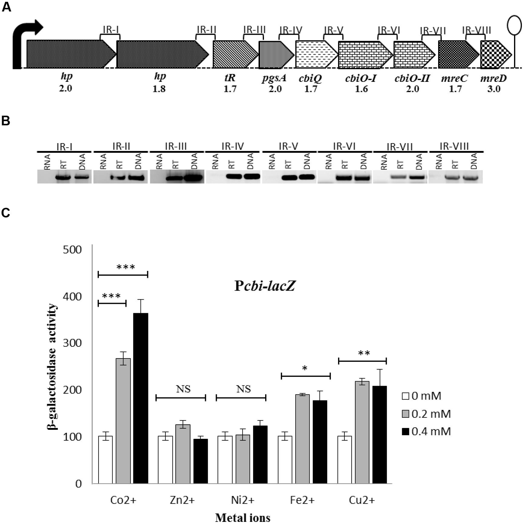 Frontiers co2 dependent gene expression in for Cdm construction phase plan template