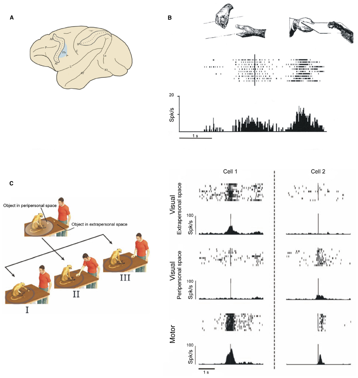 Frontiers grasping actions and social interaction for Mirror neurons psychology definition