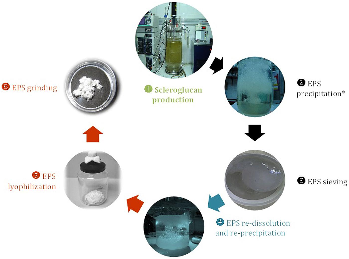introduction of thesis exopolysaccharides Pdf | microbial polysaccharides are produced in two forms, capsular  table 5  2 common components of bacterial exopolysaccharides (kenne and   laurienzo p (2010) marine polysaccharides in pharmaceutical applications: an  overview  of sulfate-modified levan polysaccharides and their bioactivity  thesis.