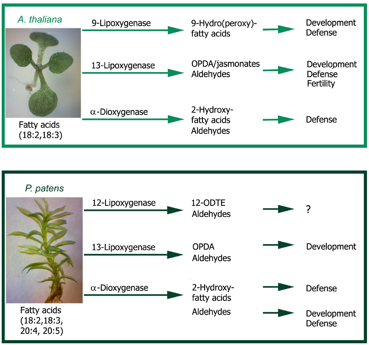 an analysis of the regulatory functions of plant cells Analysis of the functions of herpes simplex virus type 1 regulatory protein icp0 that are critical for lytic infection and derepression of quiescent viral genomes.