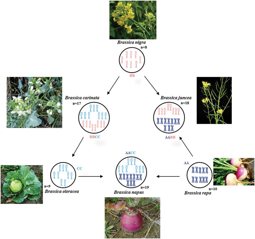 importance of plant breeding pdf