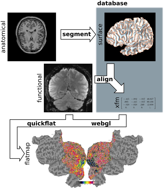 describe four methods for studying cerebral lateralization