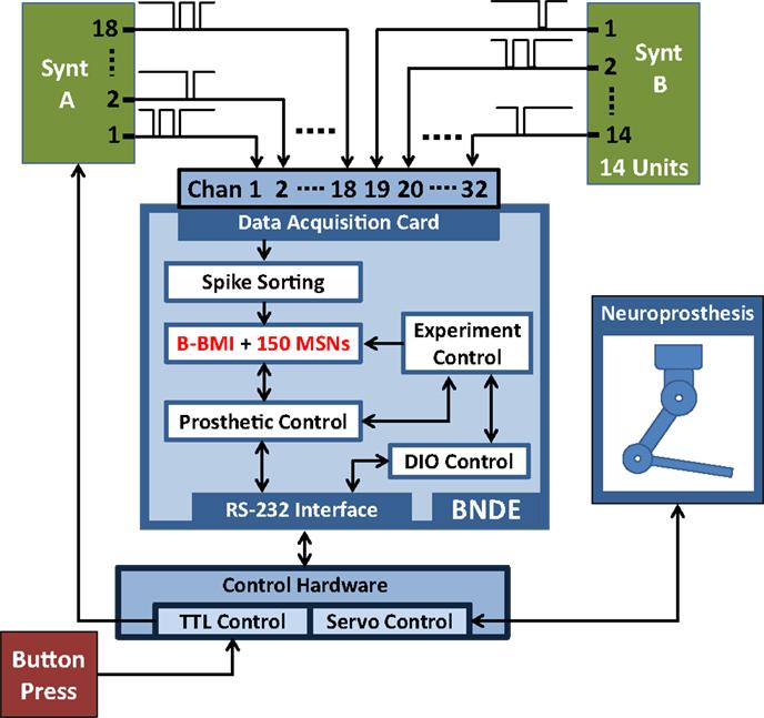 Stress Test Algorithm: Toward Building Hybrid Biological/in Silico