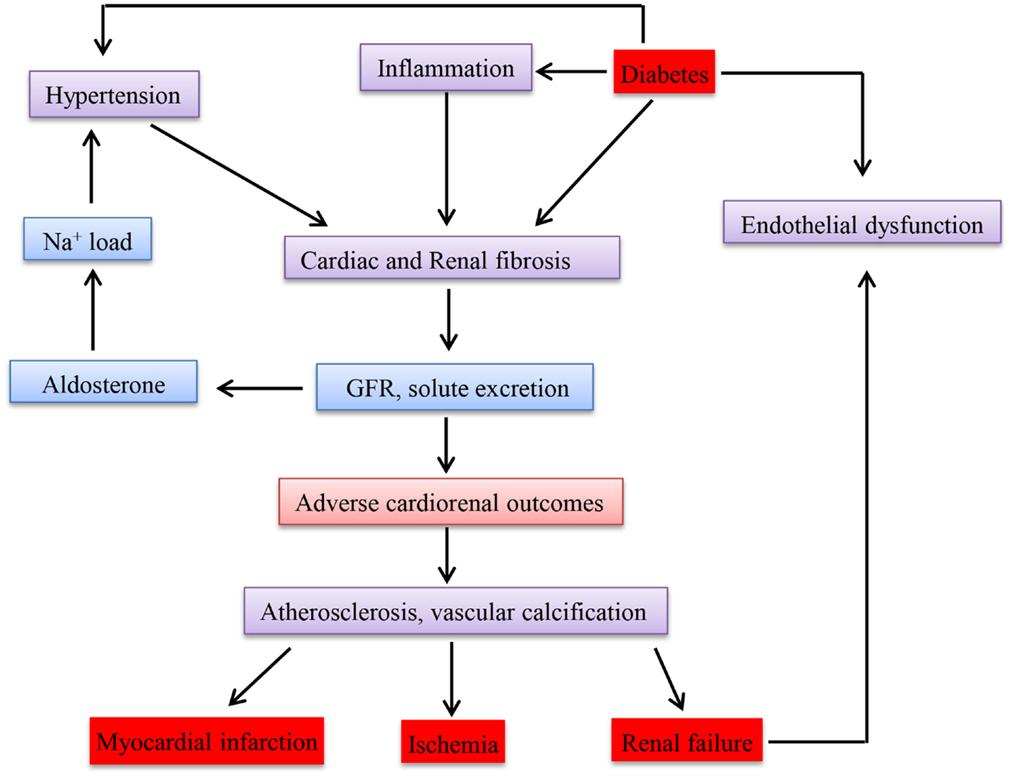 relationship between cause renal failure and diabetes mellitus