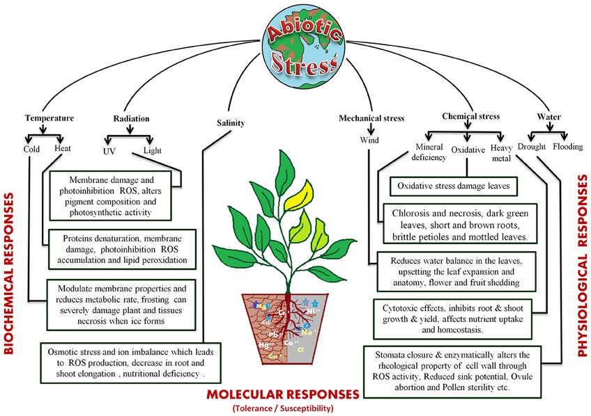 abiotic stress in plants pdf