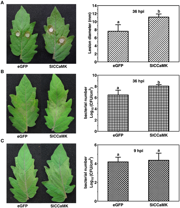 Frontiers | Phylogeny of Plant Calcium and Calmodulin ...