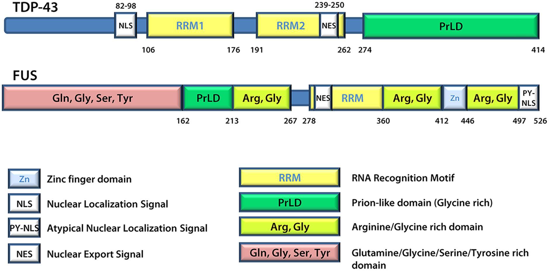 Signal Response* Signal Response II - The Signal