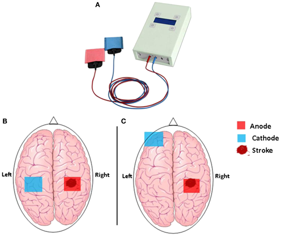 Primary Motor Cortex Location Structure And Function Of The Motor Cortex Frontal Lobe Intro At