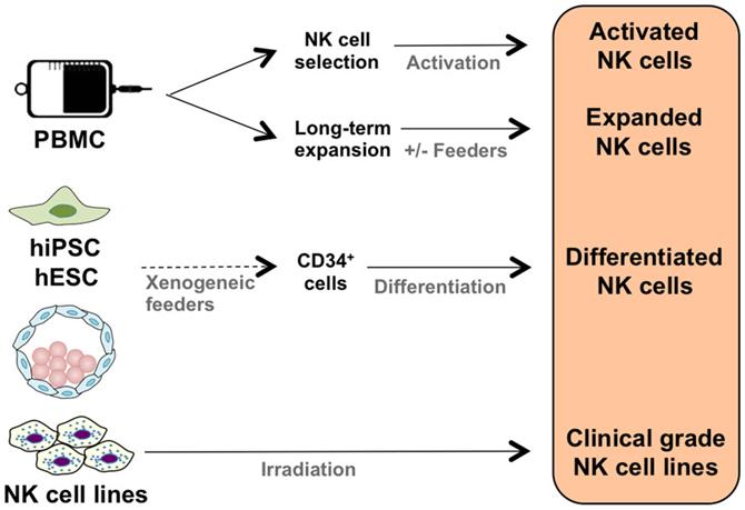 lymphokine activated killer cells pdf free