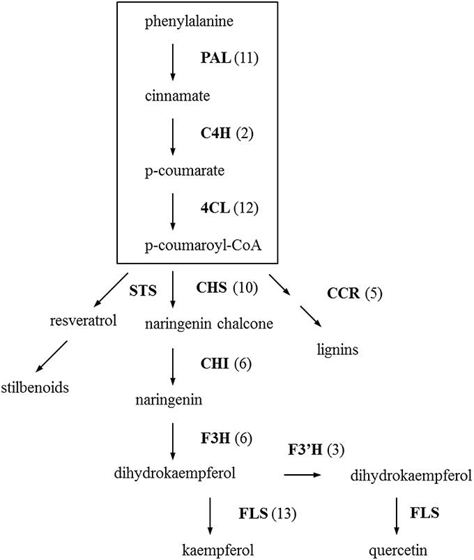 shuzhen wang thesis Wang, yun, qi, jin-shun, kong, shuzhen, sun, yajie, fan, jing, jiang, min and chen anatomy and physiology of the central extended amygdala phd thesis.