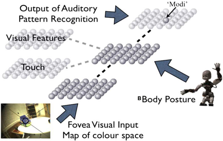 body image representations Representations which have been called body schema and body image (paillard,  1999) body schema refers to a representation of the positions of body parts in.