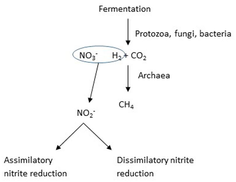 propionate methanogenesis