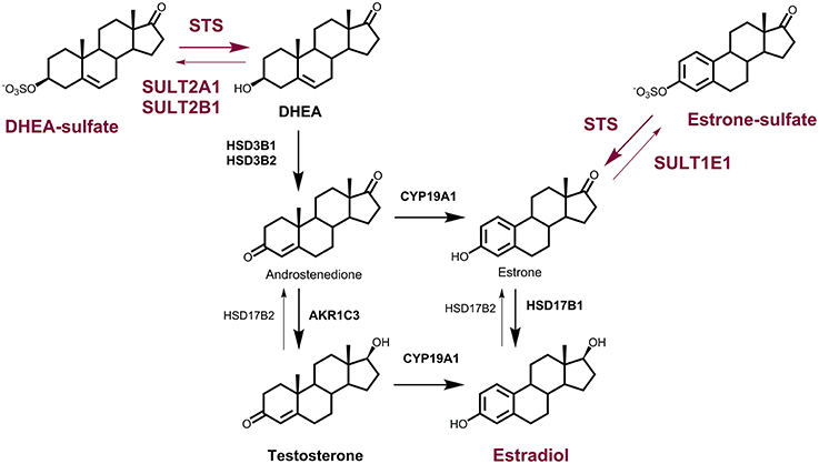ketosteroid isomerase mechanism